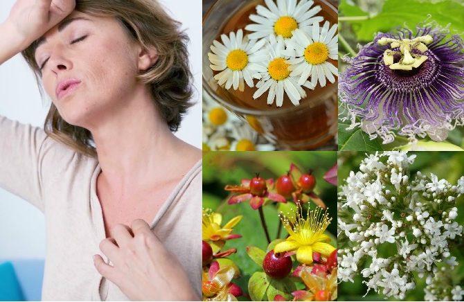 Plantas medicinales para aliviar los síntomas de la menopausia