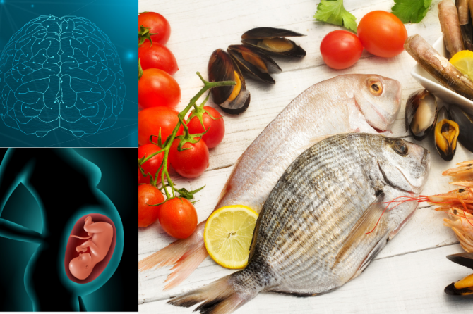 ¿Puede influir la alimentación en el desarrollo cerebral o es una cuestión de genética?