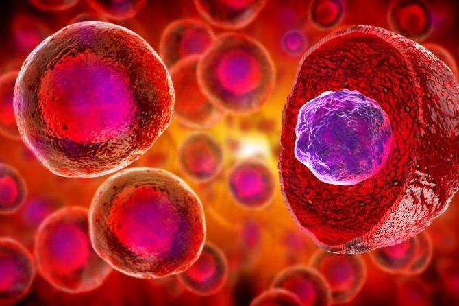 Células madre del cordón umbilical: beneficios y aplicaciones